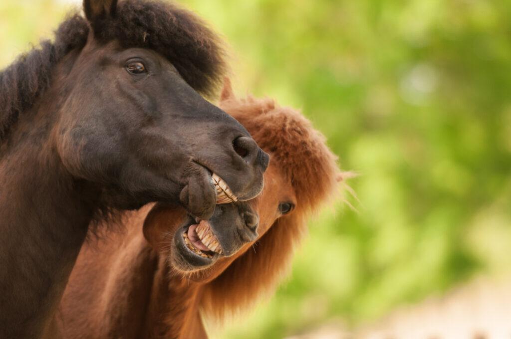 Kerstin Baden Verkaufspferde